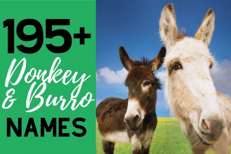 195+ Awesome Donkey & Burro Names