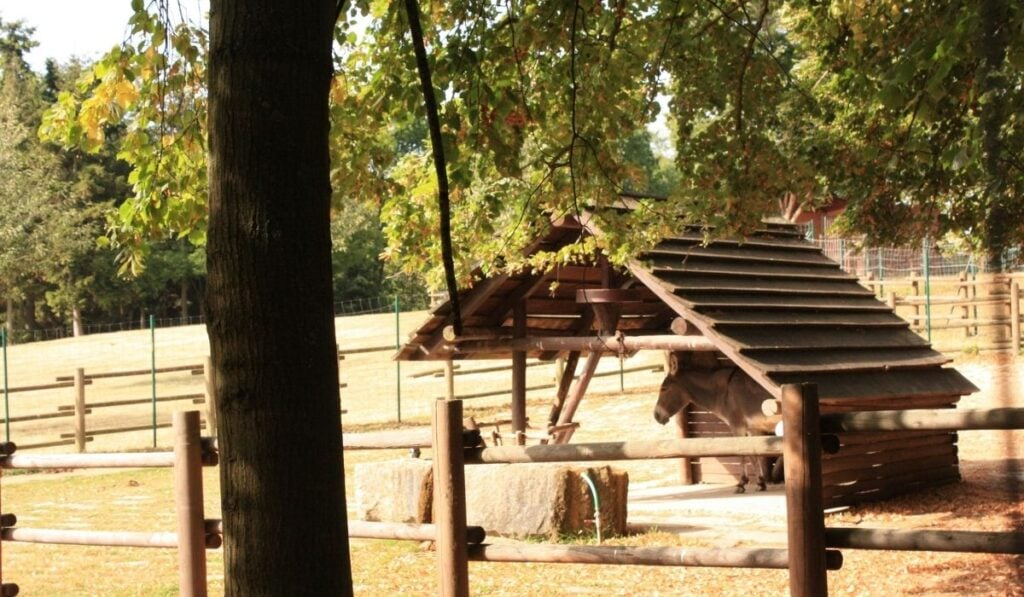 donkey in a wooden shelter