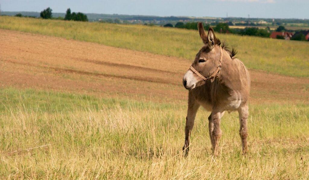 donkey on a field