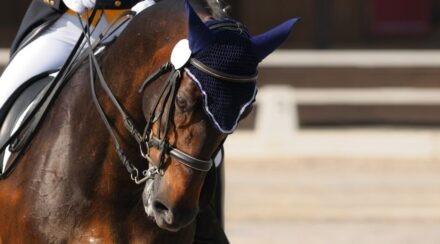 Dressage Levels – Scoring, Concepts, and Movements Required