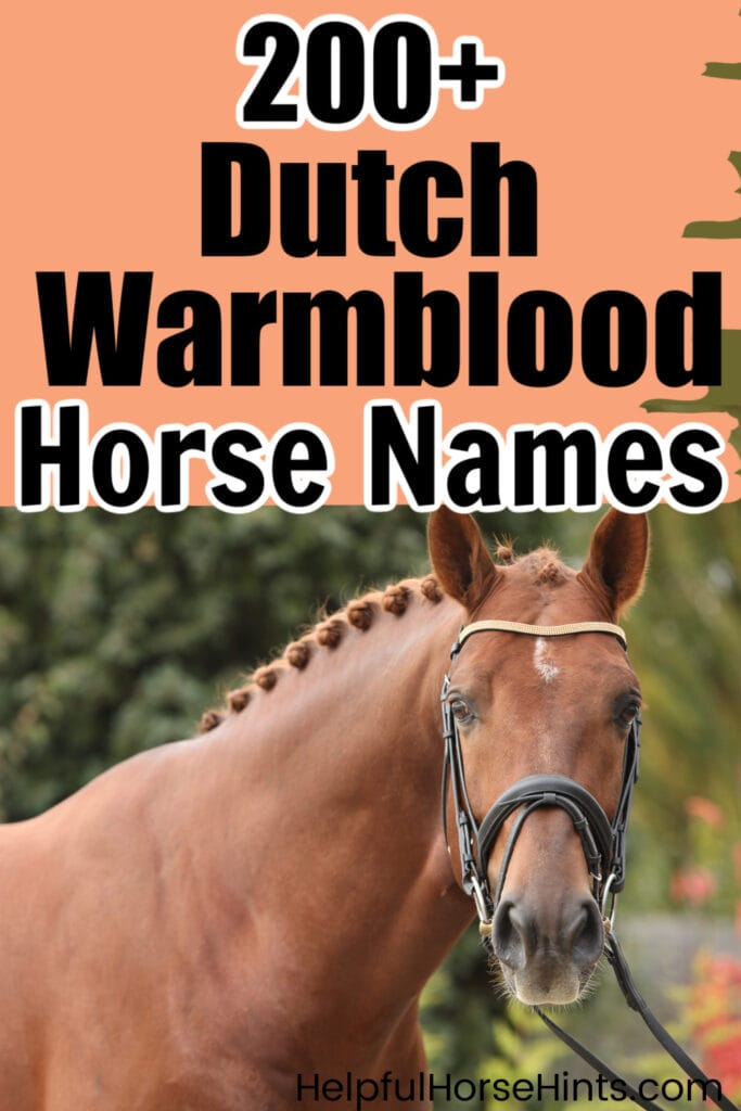 pinterest image, 200+ Dutch Warmblood Horse Names