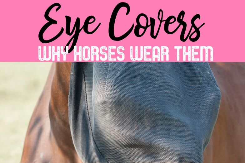Types of Horse Eye and Face Covers and Why They Are Needed