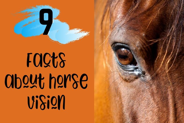 9 Facts About Horse Vision with Diagram & Examples