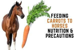 Feeding Carrots to Horses – Nutrition and Precautions