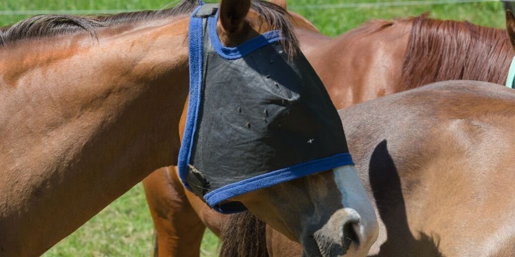 flies on a horses fly mask