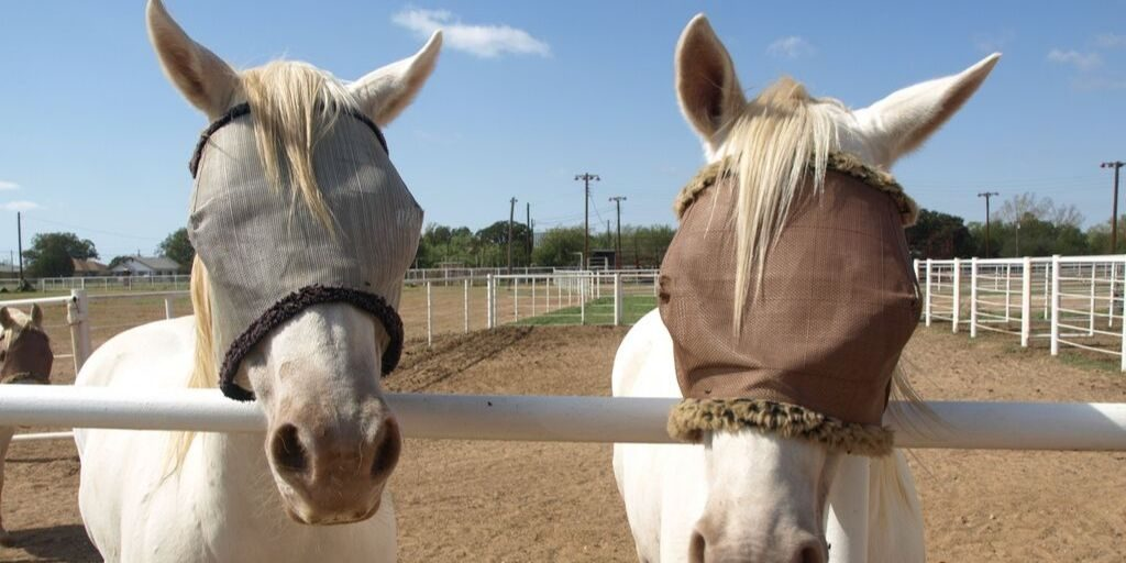 Horses wearing fly masks.