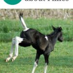 pin image, black and white filly