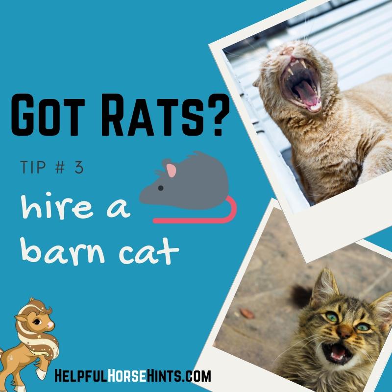 got rats? hire a barn cat.
