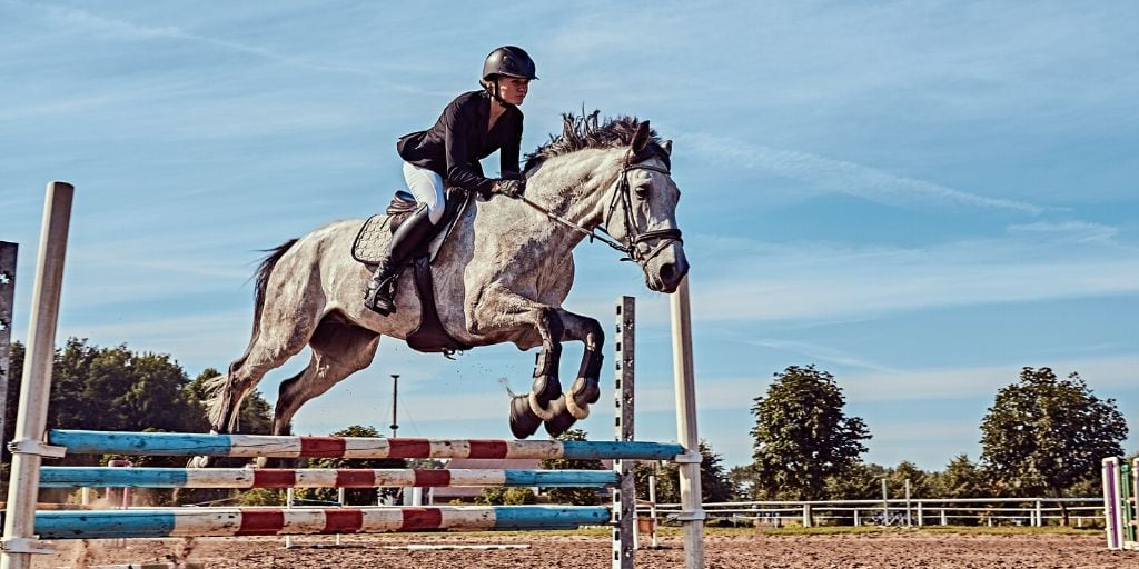 dapple gray horse jumping