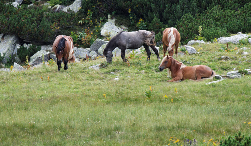 Group of horses resting on the field