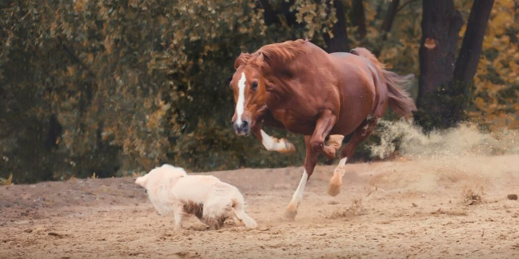 Horse attacking a dog.