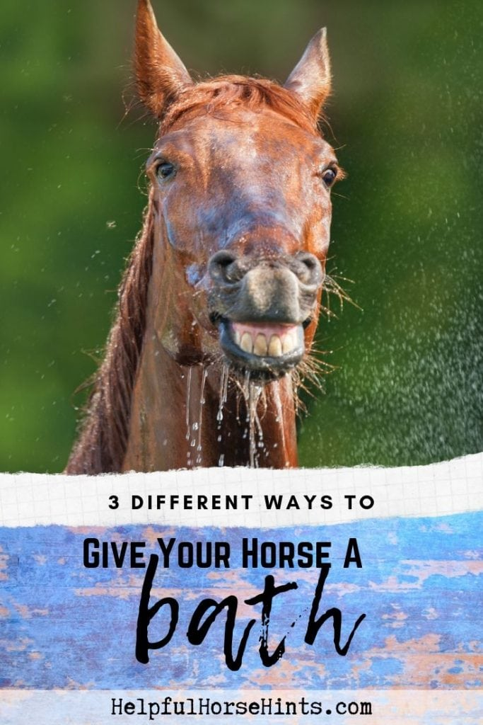 horse with wet head showing teeth