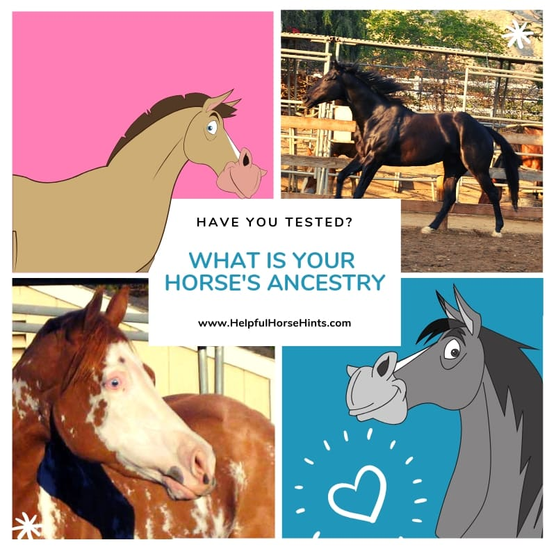 horse breed dna testing