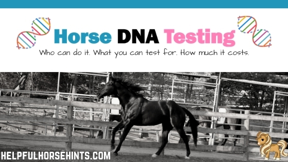 horse dna testing - who can do it