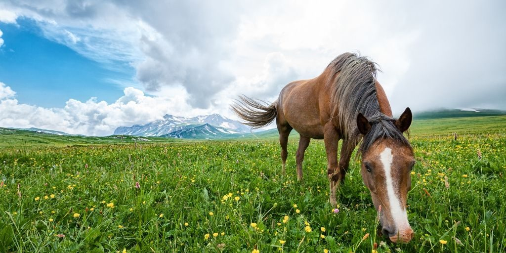 horse eating grass at pasture