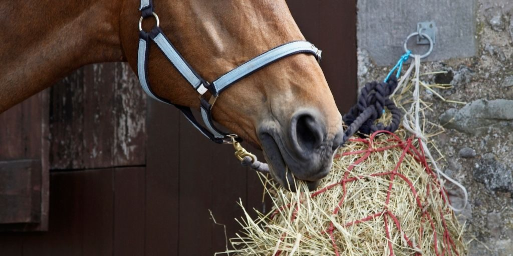 Horse eating out of hay net with very large holes