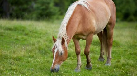 8 Best Companion Animals for a Horse