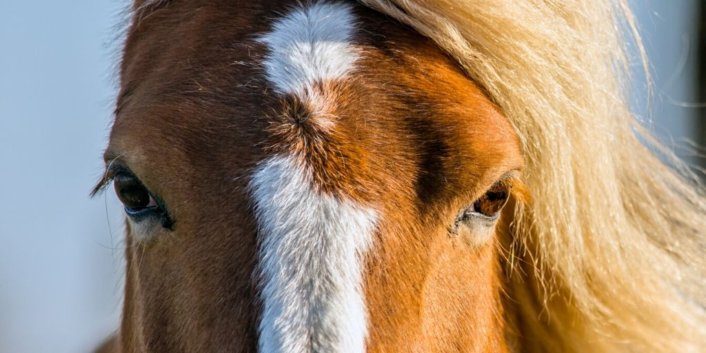 horse eyes photographed creatively