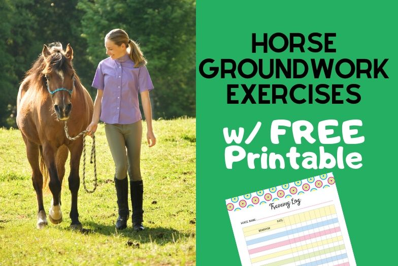 Horse Groundwork Exercises for Beginners w/FREE Training Log