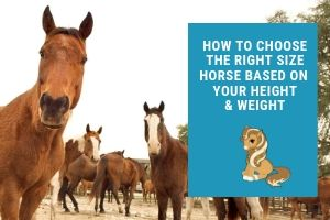 Finding The Right Size Horse for Your Height and Weight