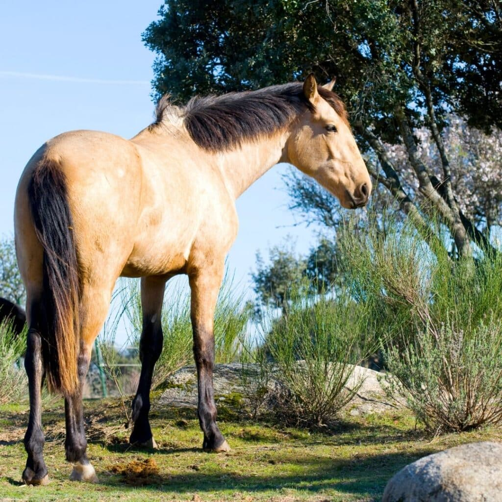 Paddock Paradise Overview And Implementation For Your Facility Helpful Horse Hints