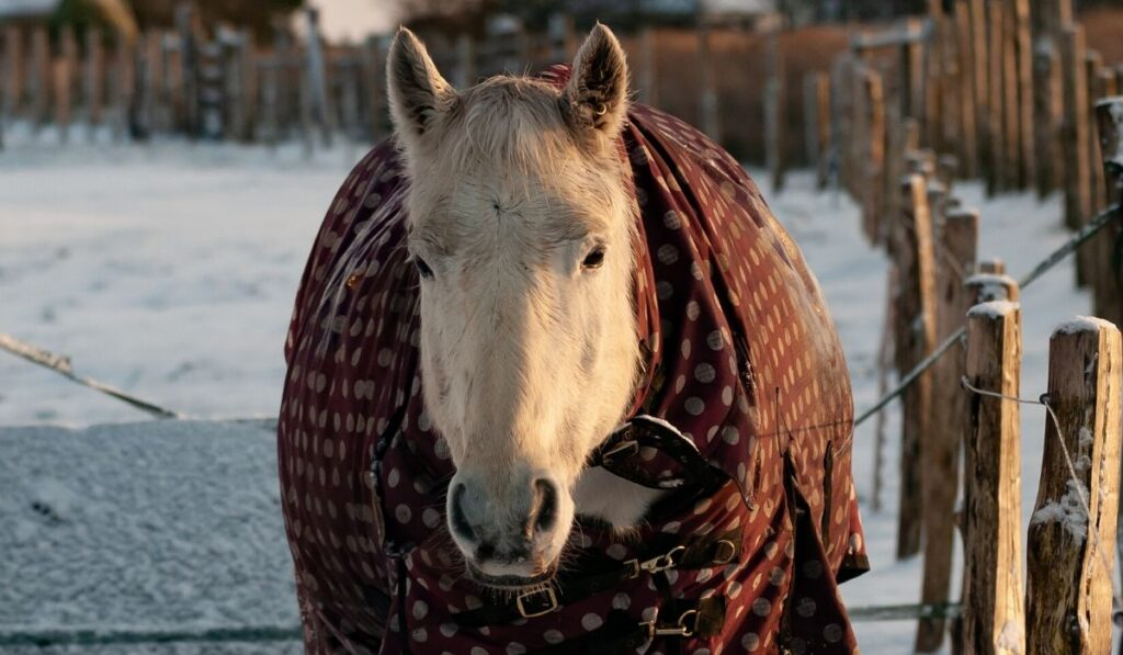 horse in snow in winter blanket