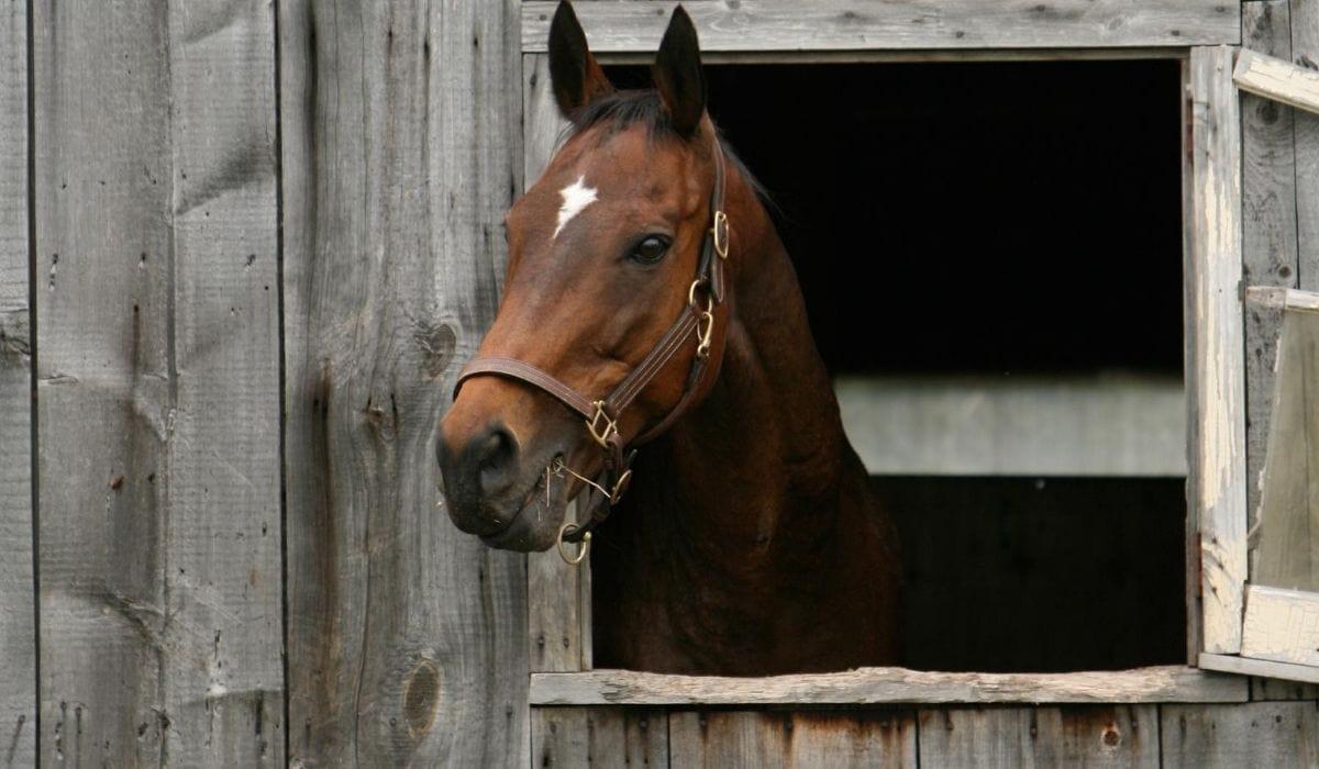 horse inside the barn quarantined