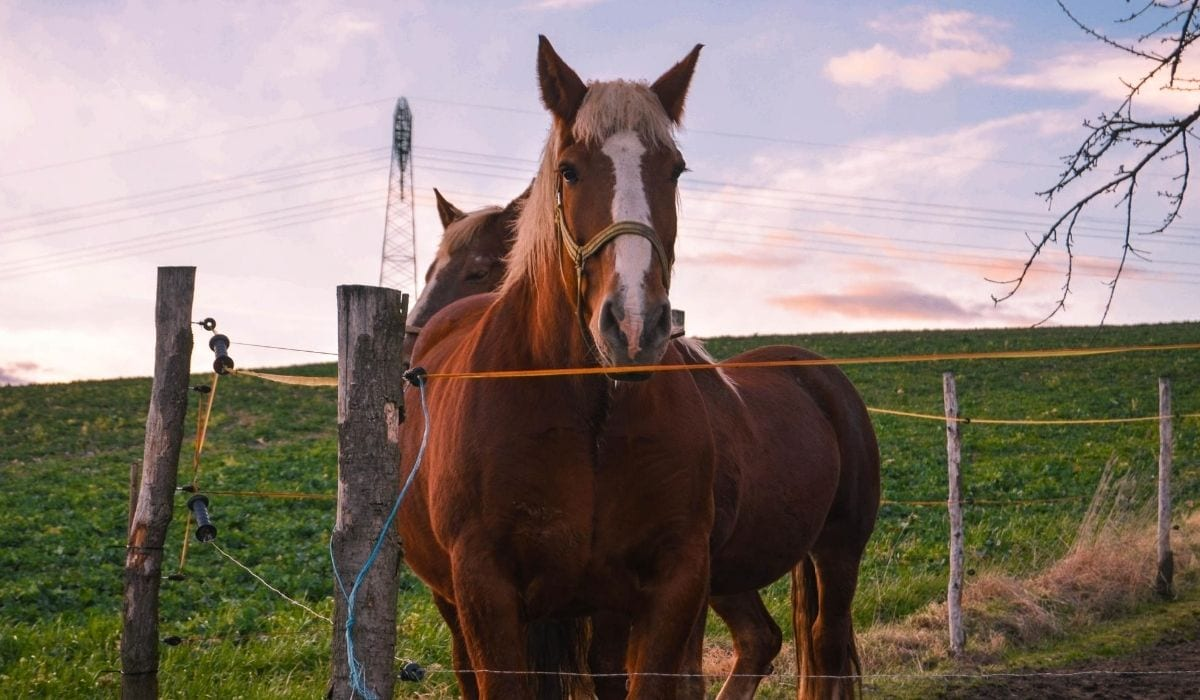 horse inside the fence