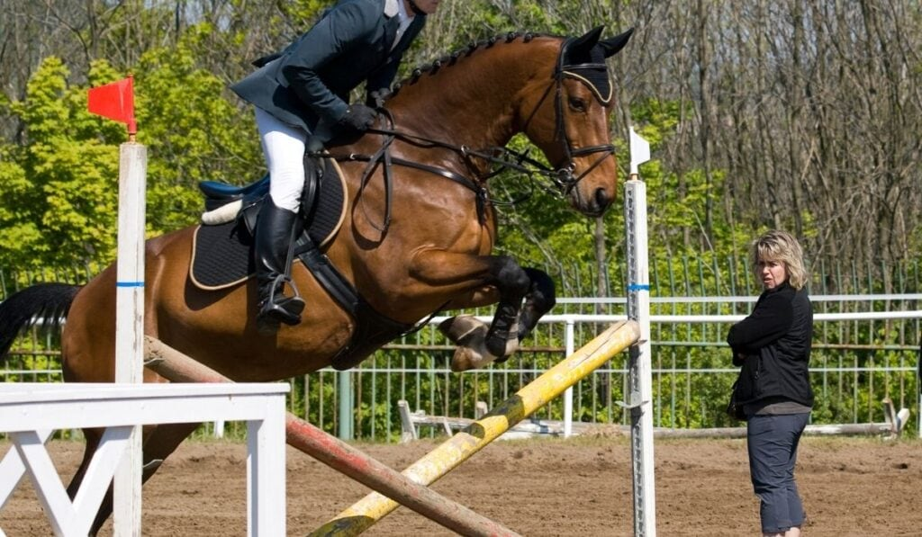 horse on a hurdle before showjumping