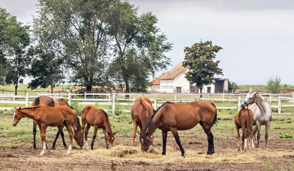 horse pastures and paddocks