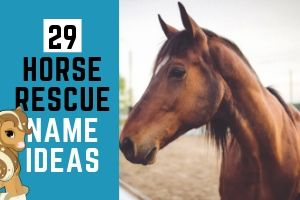 29 Awesome Horse Rescue Name Ideas
