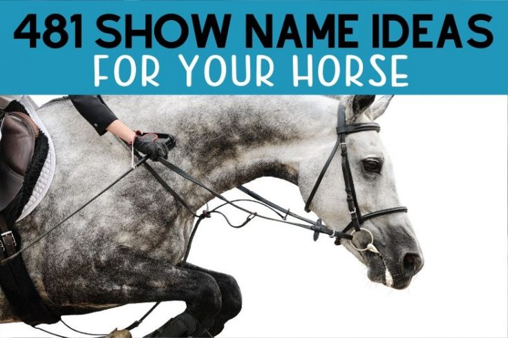 481 Awesome Show Names for Your Horse