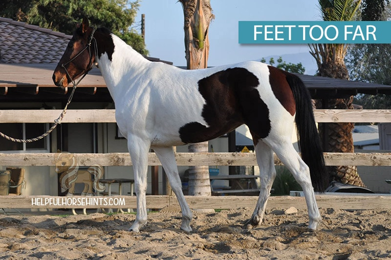 horse standing with feet too far apart for measuring height.