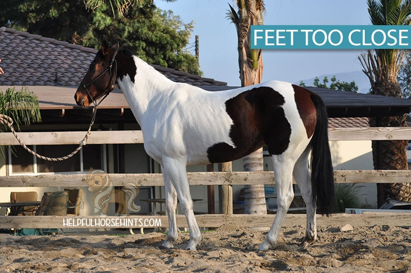 Horse standing with feet  too close together to be measured for height.