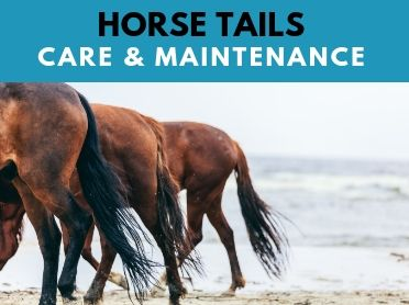 Horse Tails: A General Overview Of Your Horses Best Asset