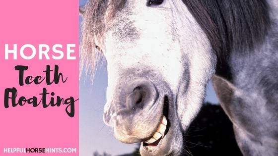 horse teeth floating