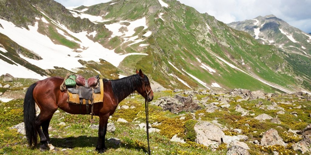 horse traveling in the mountains