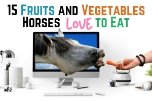 15 Fruits and Vegetables Horses Love to Eat