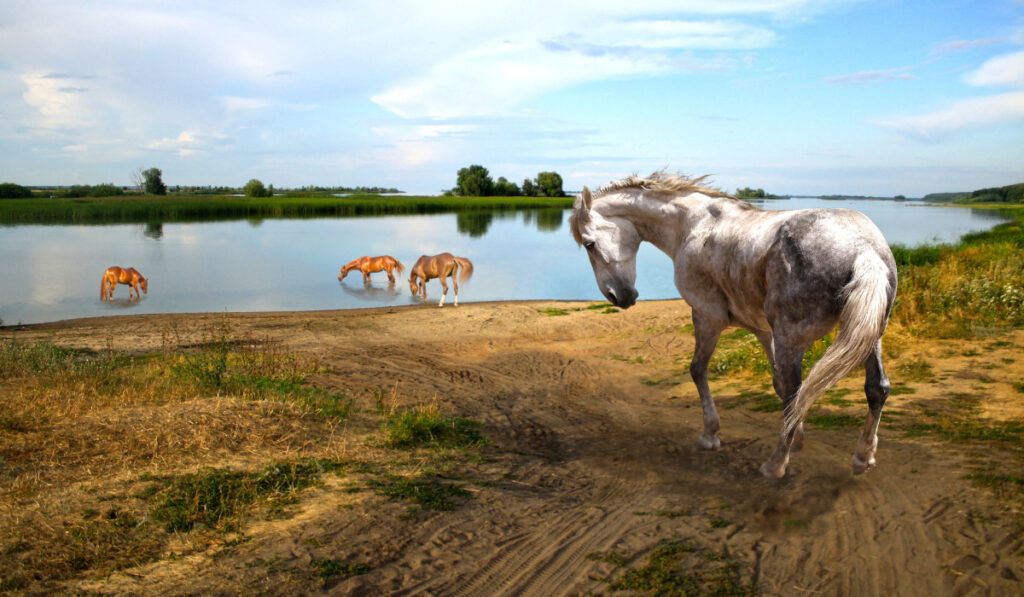 Horses drinking water at the river