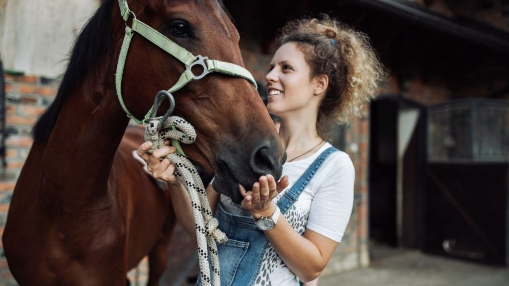 horse with handler