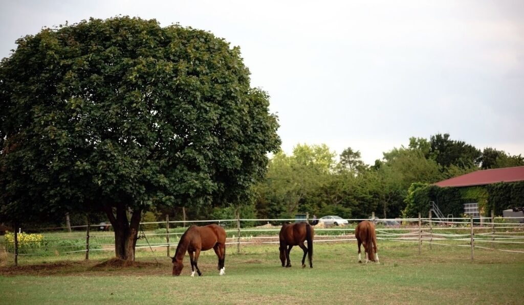 horses at the horse farm