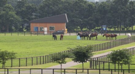 horses at the horse farm for their afternoon rounds