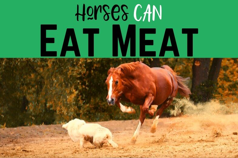 Horses Can Eat Meat – and They Do In Limited Situations