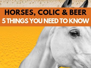 Horses, Colic and Beer: 5 Things You Need to Know