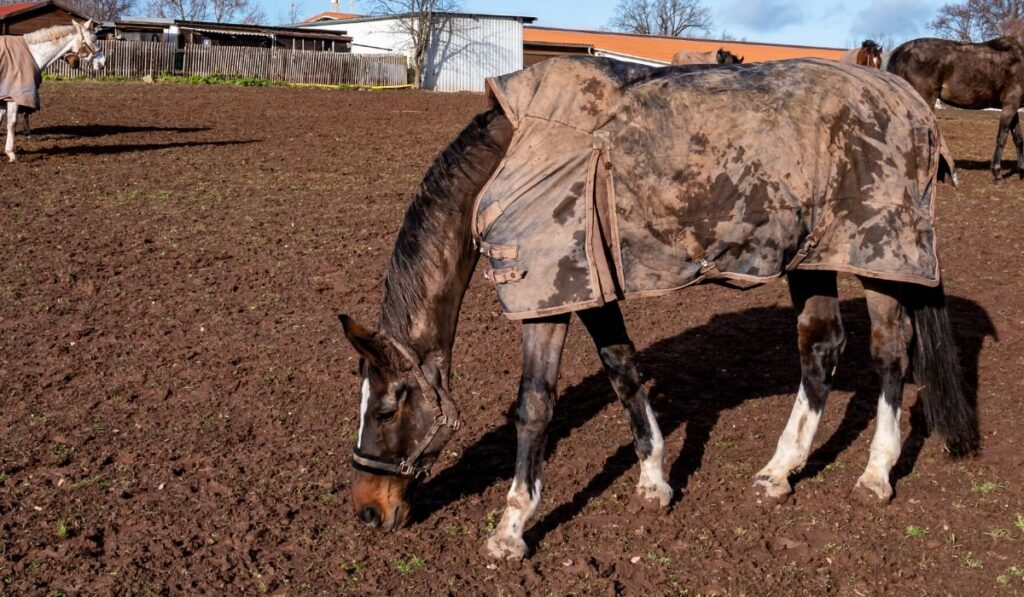 horses in turnout blankets
