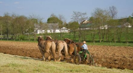 Modern Day Working Horses  & The Jobs They Hold