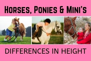Horses, Ponies and Minis – Differences in Height