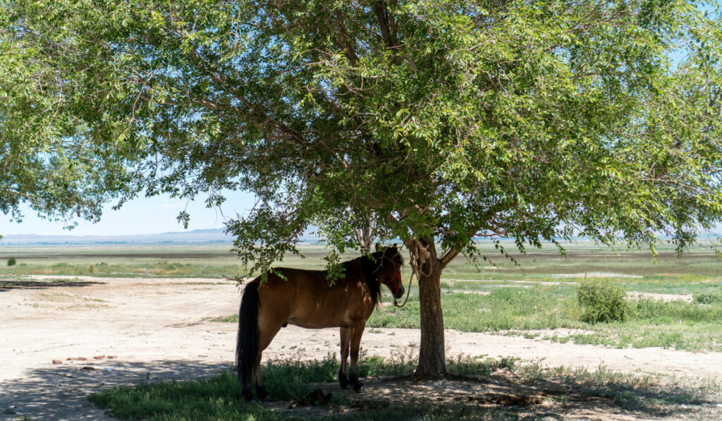 Horse tied in the tree for shade