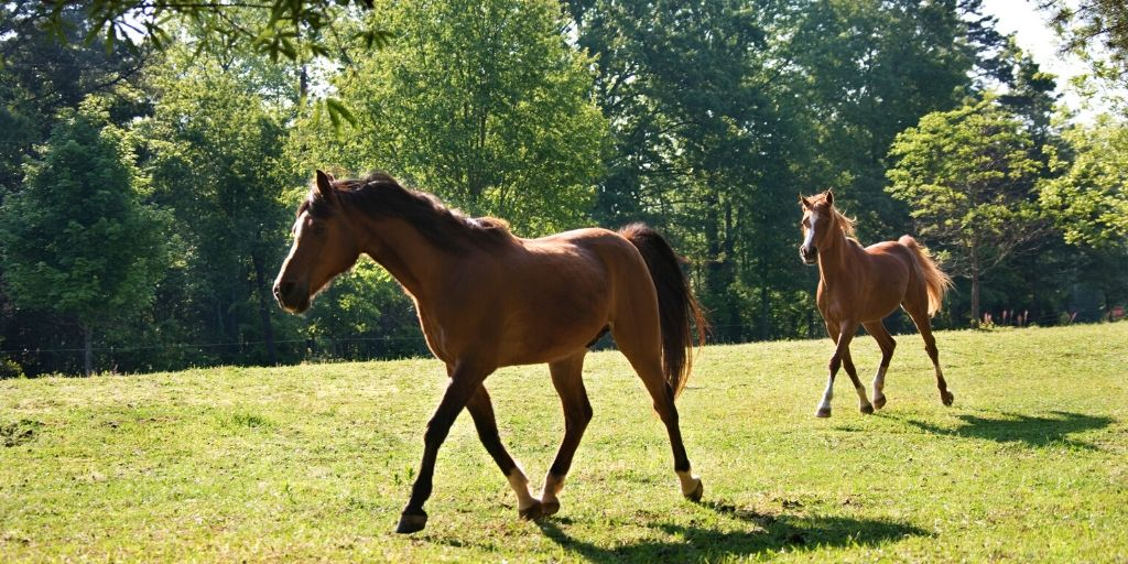 horses trotting in a pasture