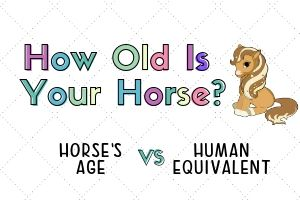 Average Lifespan of Horses and Ponies with Chart